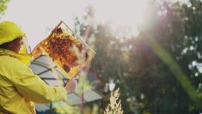 Imkermann, der Holzrahmen überprüft, bevor Honig im Bienenhaus geerntet wird Stockfotografie