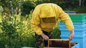 Imkermann, der Holzrahmen überprüft, bevor Honig im Bienenhaus geerntet wird Lizenzfreies Stockfoto