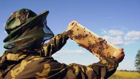 Imkermann, der Holzrahmen überprüft, bevor Honig im Bienenhaus am sonnigen Tag geerntet wird Lizenzfreie Stockbilder