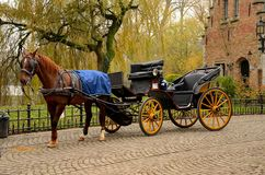 Immaculate Horse And Carriage Brugge Belgium Royalty Free Stock Photography