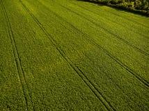 Immagine aerea di un verde fertile archivato Fotografie Stock Libere da Diritti