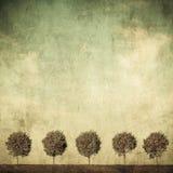 Immagine altamente dettagliata di lerciume degli alberi Immagini Stock Libere da Diritti