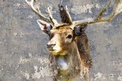 Immagine artistica con la testa dei cervi di struttura del fondo Immagine Stock Libera da Diritti
