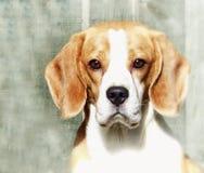 Immagine artistica di un cane del cane da lepre immagine stock
