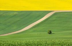 Immagine astratta con i campi colorati Immagini Stock