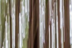 Immagine astratta degli alberi alti in foresta pluviale, isola di Vancouver, BC Immagine Stock