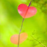 Immagine astratta di cuore sul nastro su un fondo di verde Fotografia Stock