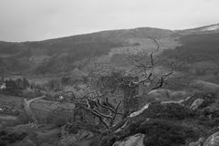 Immagine in bianco e nero castello dolwyddelan Galles del nord, Regno Unito Immagine Stock Libera da Diritti