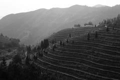 Immagine in bianco e nero dei terrazzi delle colline del tè Immagine Stock Libera da Diritti