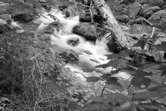 Immagine in bianco e nero di una corrente del terreno boscoso in legno fotografia stock