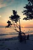 Immagine classica della siluetta di colore di tono di umore dell'albero della mangrovia sulla spiaggia con il tramonto sbalorditi Fotografia Stock