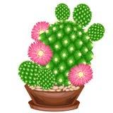 Immagine a colori Pianta conservata in vaso in un POT Il cactus verde ? sferico con i tubercoli coperti di spine dorsali Mammilla illustrazione vettoriale