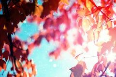 Immagine composita del chiarore Immagini Stock