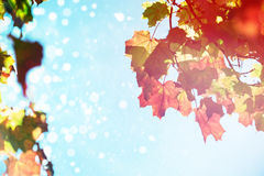 Immagine composita del chiarore Immagine Stock
