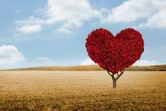 Immagine composita della pianta del cuore di amore Fotografie Stock Libere da Diritti