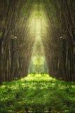 Immagine confusa del tunnel immaginario dell'albero Fotografia Stock Libera da Diritti