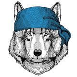 Immagine d'uso animale della bandana o della bandana o del bandanna di Wolf Dog Wild per il pirata Seaman Sailor Biker Motorcycle Fotografia Stock Libera da Diritti