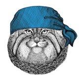 Immagine d'uso della bandana o della bandana o del bandanna del gatto dell'animale selvatico selvaggio di Manul per il pirata Sea Immagini Stock Libere da Diritti