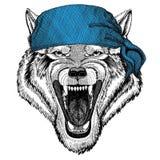 Immagine d'uso della bandana o della bandana o del bandanna dell'animale selvatico animale di Wolf Dog Wild per il pirata Seaman  Immagini Stock