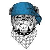 Immagine d'uso della bandana o della bandana o del bandanna dell'animale selvatico del bulldog per il pirata Seaman Sailor Biker  Fotografie Stock