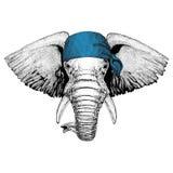 Immagine d'uso della bandana o della bandana o del bandanna dell'animale selvatico dell'elefante africano o indiano per il pirata Immagini Stock Libere da Diritti