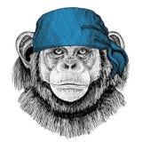 Immagine d'uso della bandana o della bandana o del bandanna dell'animale selvatico della scimmia dello scimpanzè per il pirata Se Fotografia Stock Libera da Diritti