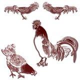 Immagine decorativa di vettore di un gallo e di una gallina Usi i materiali stampati, i segni, i manifesti, cartoline, imballanti Immagini Stock Libere da Diritti