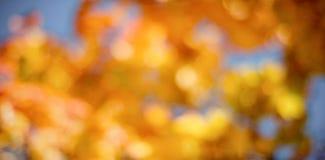 Immagine Defocused delle foglie di acero Fotografie Stock Libere da Diritti