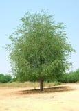 Immagine degli alberi Fotografia Stock