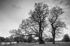 Immagine degli alberi nel campo Immagini Stock