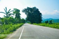 immagine degli alberi verdi un grande albero dal lato di una strada fotografie stock libere da diritti