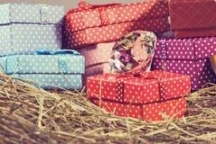 immagine dei contenitori di regalo nel primo piano del fieno Immagine Stock