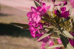 Immagine dei fiori nel parco dalla destra immagine stock libera da diritti