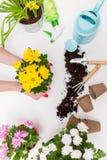 Immagine dei fiori in vasi, annaffiatoi, pala, rastrello su fondo bianco vuoto Immagine Stock