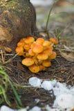 Immagine dei funghi nel primo piano della foresta Immagini Stock Libere da Diritti
