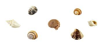 Immagine dei seashells su priorità bassa bianca Immagini Stock