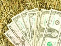 Immagine dei soldi dei dollari sul primo piano del fieno Fotografia Stock Libera da Diritti