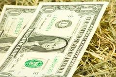 Immagine dei soldi dei dollari sul primo piano del fieno Fotografie Stock
