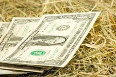 Immagine dei soldi dei dollari sul primo piano del fieno Immagine Stock Libera da Diritti