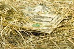 Immagine dei soldi dei dollari sul primo piano del fieno Fotografia Stock