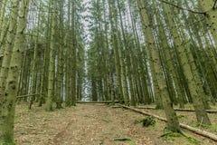 Immagine dei tronchi verdi degli alberi e dei tronchi di albero caduti da una prospettiva più bassa fotografia stock libera da diritti