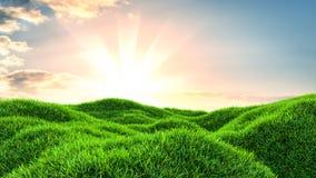 Immagine del campo di erba verde e del cielo blu luminoso Fotografie Stock Libere da Diritti