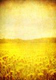 Immagine del campo di fioritura sopra il documento dell'annata fotografie stock