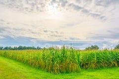 immagine del campo di grano e del cielo nel fondo Fotografia Stock Libera da Diritti