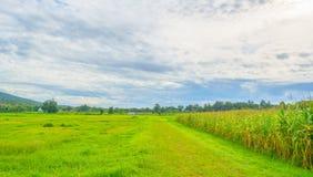 immagine del campo di grano e del cielo nel fondo Fotografie Stock Libere da Diritti