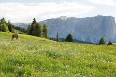 Immagine del cavallo sulla catena montuosa di Lankoffel Vista da Seiser Alm Fotografia Stock Libera da Diritti