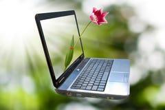 Immagine del computer portatile su un fondo verde Immagine Stock