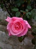 Immagine del fiore Immagini Stock
