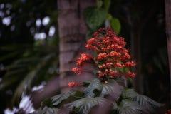Immagine del fiore trovata in India di estate! immagine stock libera da diritti