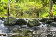 Immagine del fondo degli alberi e degli scorrimenti dell'acqua tramite il percorso roccioso o Immagini Stock Libere da Diritti